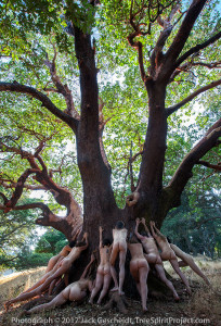 Mama-Madrone-TreeSpirit-Project-VERTICAL-7293-1200p-WEB.jpg