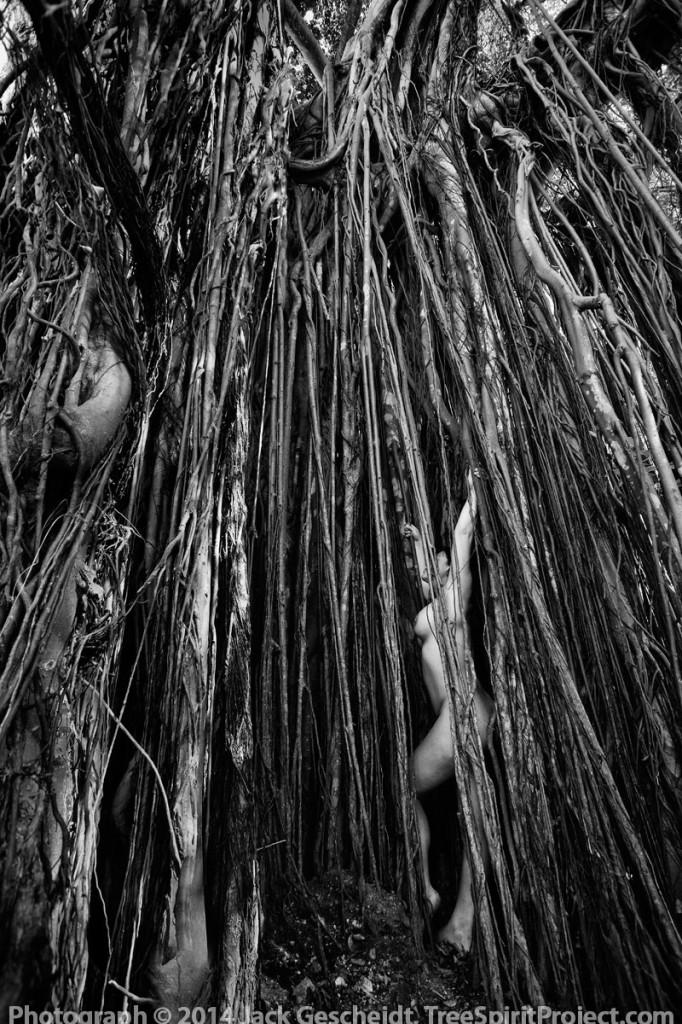 Hawaiian-TreeSpirits-retreat-March-22-25-2018.jpg