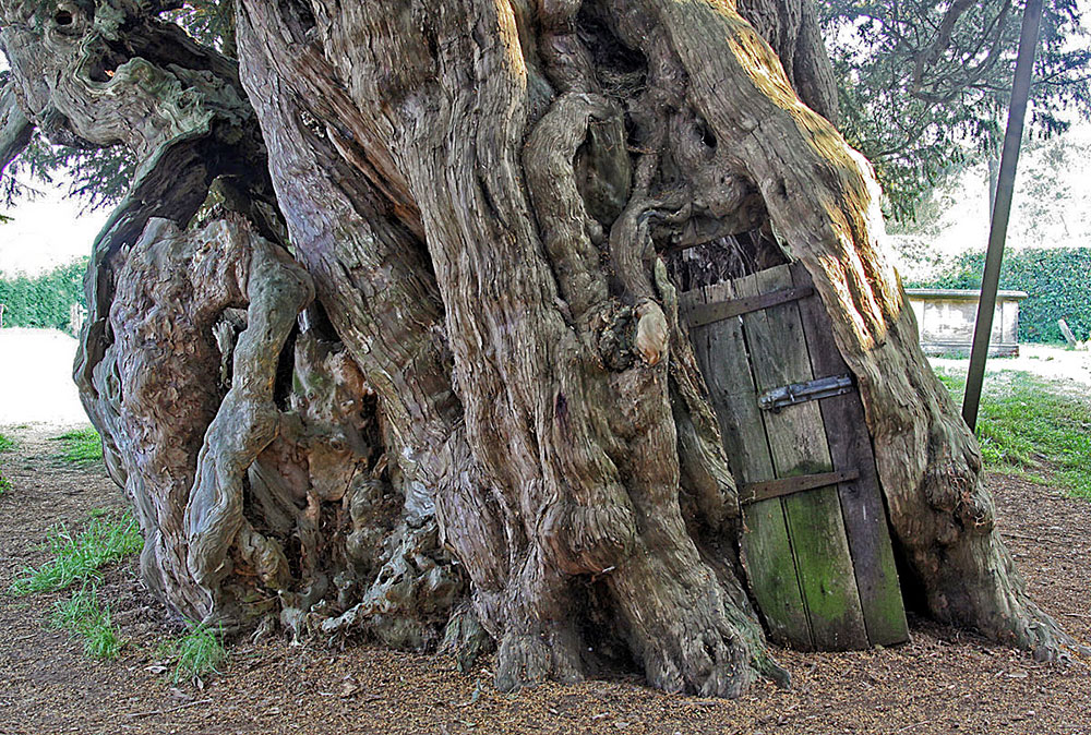 Crowhurst-Yew-sacred-trees-TreeSpirit-Proejct-England-door- & Sacred Trees \u0026 Ancient Sites of ENGLAND | TreeSpirit Project