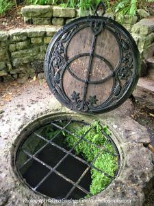 Glastonbury-Chalice-Well-Sacred-Tree-Ancient-Sites-England-TreeSpirit-Project-Journey-BY-CaraMia-Photography-900p-WEB