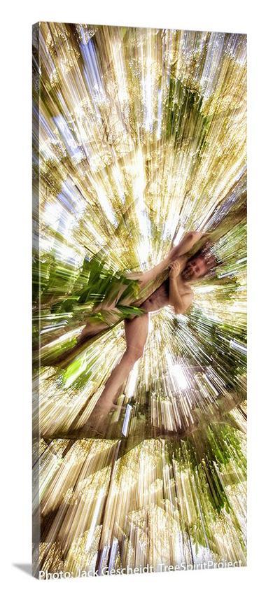 Hawaiian-TreeSpirits-Jack-Gescheidt-1354-narrow-1000p-CANVAS.jjpg