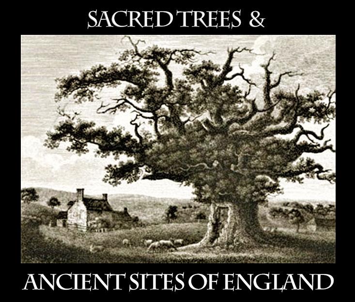 Sacred-Trees-Ancient-Sites-of-England-flyer-v1-Bowthorpe-Oak-drawing-v3-WEB.jpg
