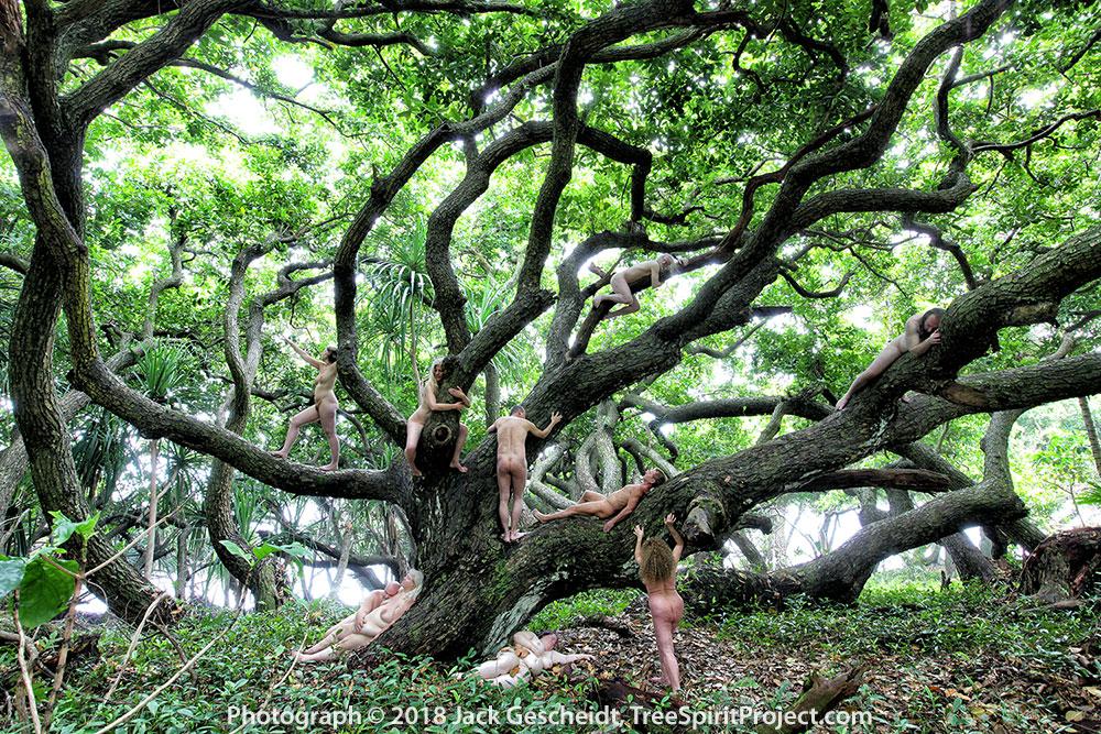 TreeSpirit-Project-retreat-group-Hawaii-1569-1000p-WEB