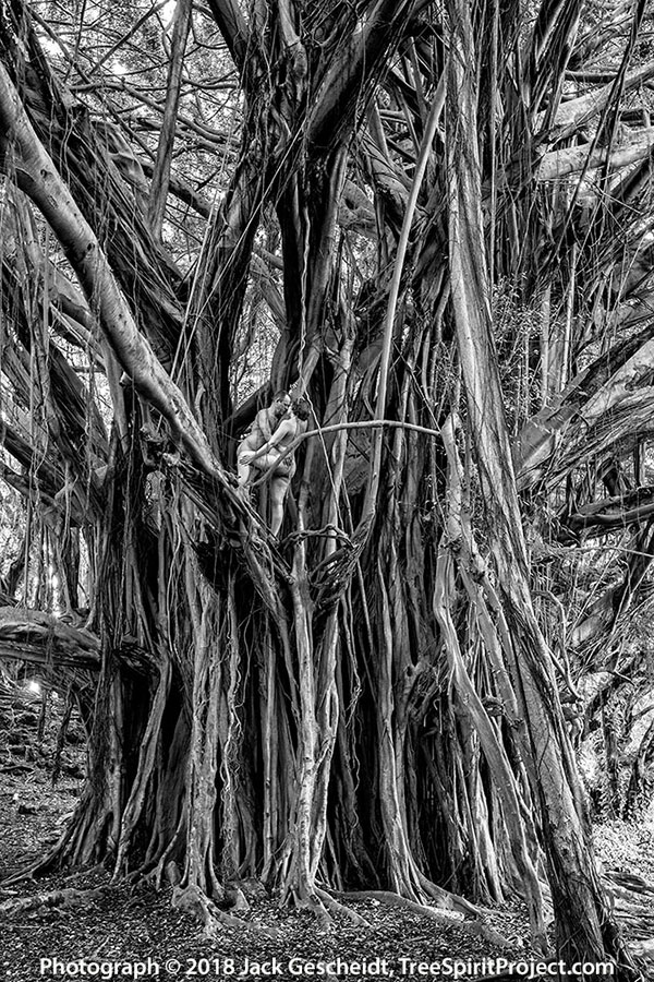banyan-couple-Hawaiian-TreeSpirits-TreeSpirit-Project-1709-BW-900p-WEB