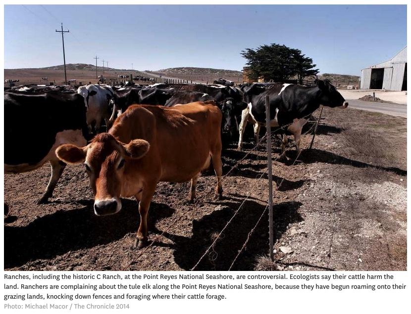 cattle-point-reyes-national-seashore-park-photo-by-Michael-Macor-San-Fran-Chronicle-bordered.jpg