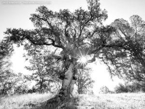 Sunrise-2481-BW-TreeSpirit-Project-1200p-WEB