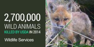 USDA-Wildlife-Services-killed-2.7-million-wild-animals-2014-font-WEB.jpg