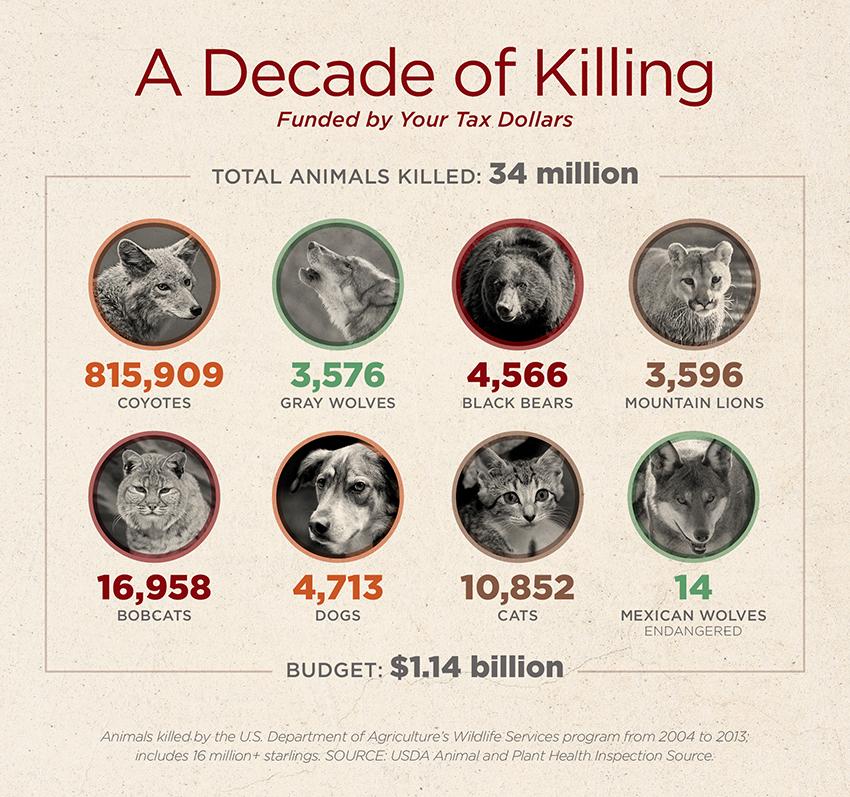 Wildlife-Services-decade-of-killing-34-million-animals.jpg