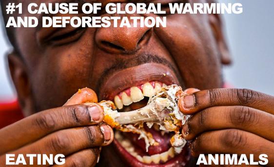 eating-animal-flesh-#1-cause-global-deforestaton-warming-WEB.jpg