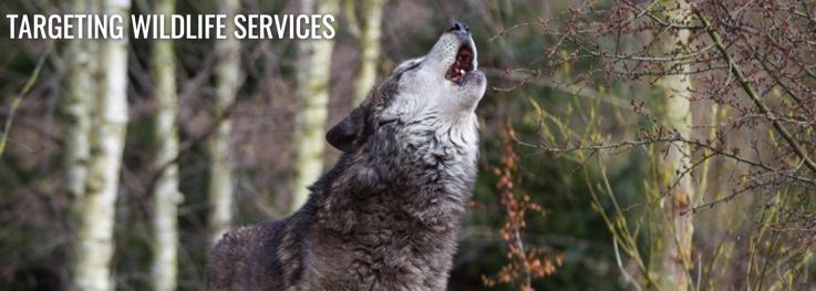 Targeting-Wildlife-Services-Center-for-Biological-Diversity.jpg