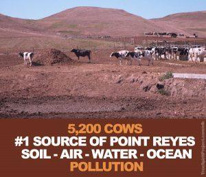 Point-Reyes-National-Seashore-Park-5000-cows-pollution-GHGs-wild-tule-elk-environment-fecal-coliform.jpg