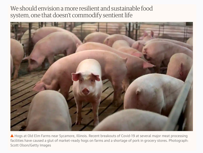Gene-Baur-The-Guardian-Time-to-dismantle-factory-farms-get-used-to-eating-less-meat-May-19-2020.jpg