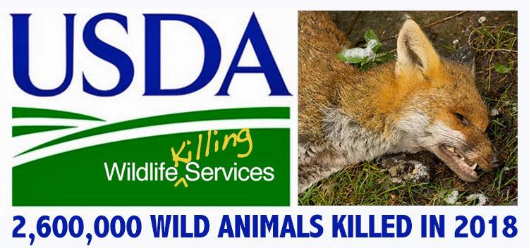 USDA-Wildlife-Services-killed-2.6-million-wild-animals-2018-LOGO-KILLING-DEAD-FOX-WEB-750p-WEB.jpg