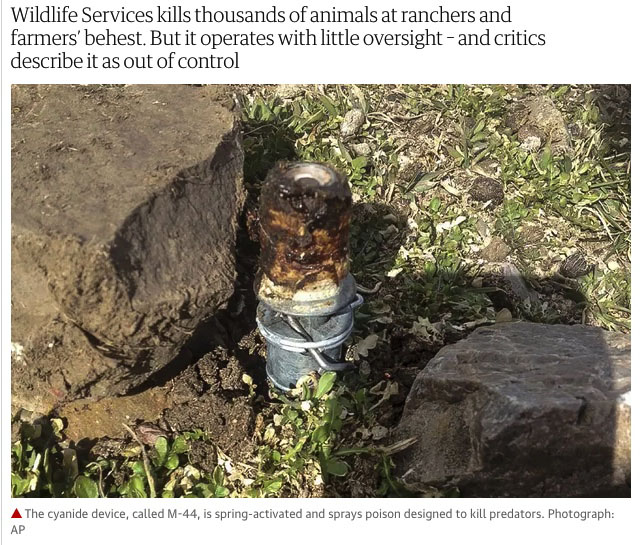 Wildlife-Services-M-44-cyanide-poison-bomb-device-The-Guardian-kill-animals.jpg