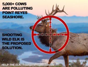 tule-elk-in-crosshairs-PRNS-Point-Reyes-National-Seashore-Park-cows-pollute-shoot-kill.jpg
