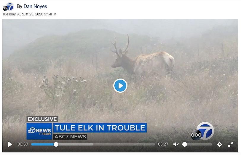 Point-Reyes-tule-elk-in-trouble-wildfire-drought-ABC-7-TV-NEWS.jpg