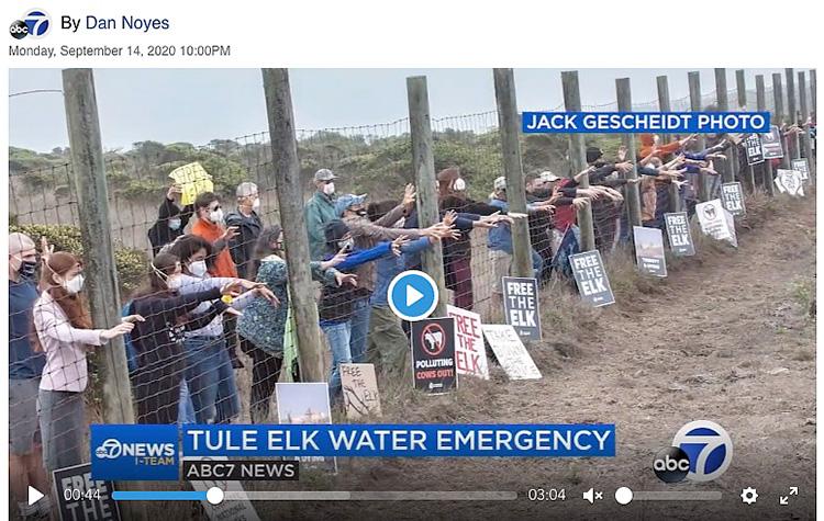 ABC-7-TV-News-Point-Reyes-National-Seashore-Tule-Elk-Water-Activists-Emergency-Dan-Noyes-Sept-14-2020.jpg