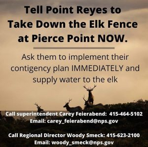 tule-elk-ACTIONS-call-Point-Reyes-National-Seashore-call-National-Park-Service-Sept-2020