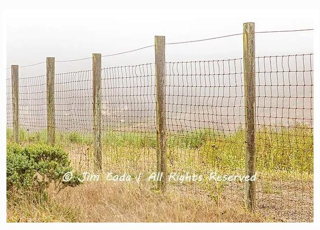 fence-elk-Point-Reyes-National-Seashore-by-Jim-Coda.jpg