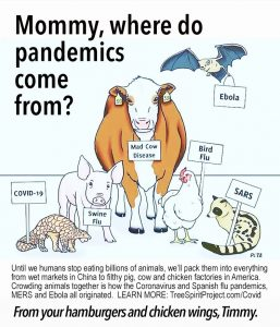 Eating-Animals-Causes-Pandemics-graphic-by-PETA-text-by-JG-MOMMY-WHERE-DO-PANEMICS-COME-FROM-TSP.com-WEB.jpg