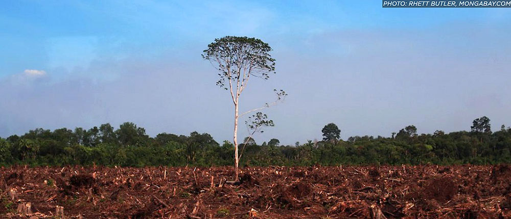Cattle-Driving-Deforestation-Union-of-Concerned-Scientists-photo-Rhett-Butler-Mongabay.com-1000p-WEB.jpg