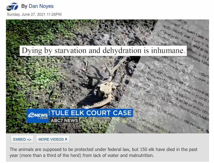 ABC-7-TV-News-Dan-Noyes-Point-Reyes-National-Seashore-Tule-elk-June-27-2021.jpg