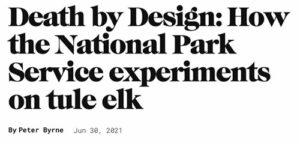 Death-by-Design-How-the-National-Park-Service-experiments-on-Tule-elk-Point-Reyes-National-Seashore-Peter-Byrne-Pacific-Sun-June-30-2021-550p-WEB.jpg