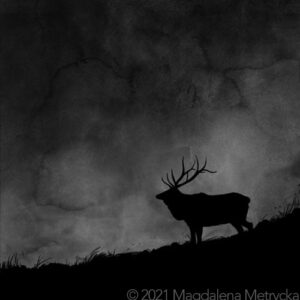 Point-Reyes-National-Seashore-Tule-elk-night-fog-Nocturne-podcast-by-Vanessa-Lowe-w-Jack-Gescheidt.jpg