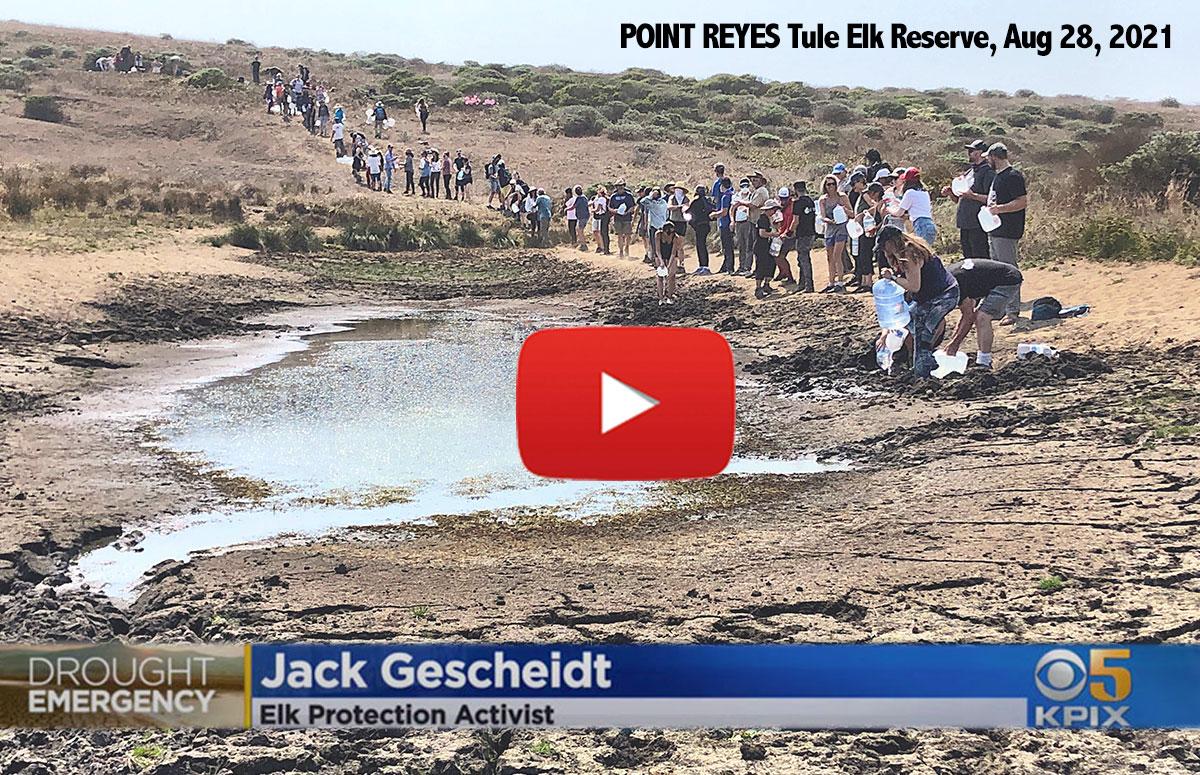 EMERGENCY-WATER-DELIVERY-Point-Reyes-National-Seashore-Tule-Elk-Reserve-dry-pond-citizen-activists-line-CBS-Channel-5-KPIX-John-Ramos-1200p-WEB.jpg