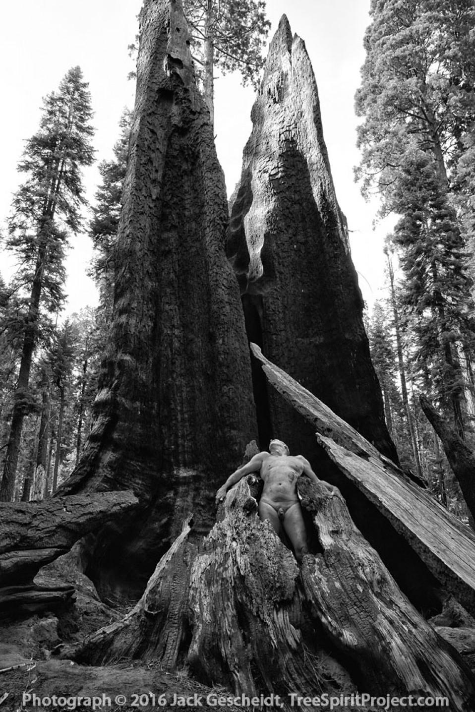 Prometheus-Treespirit-Project-5187-1000p-WEB