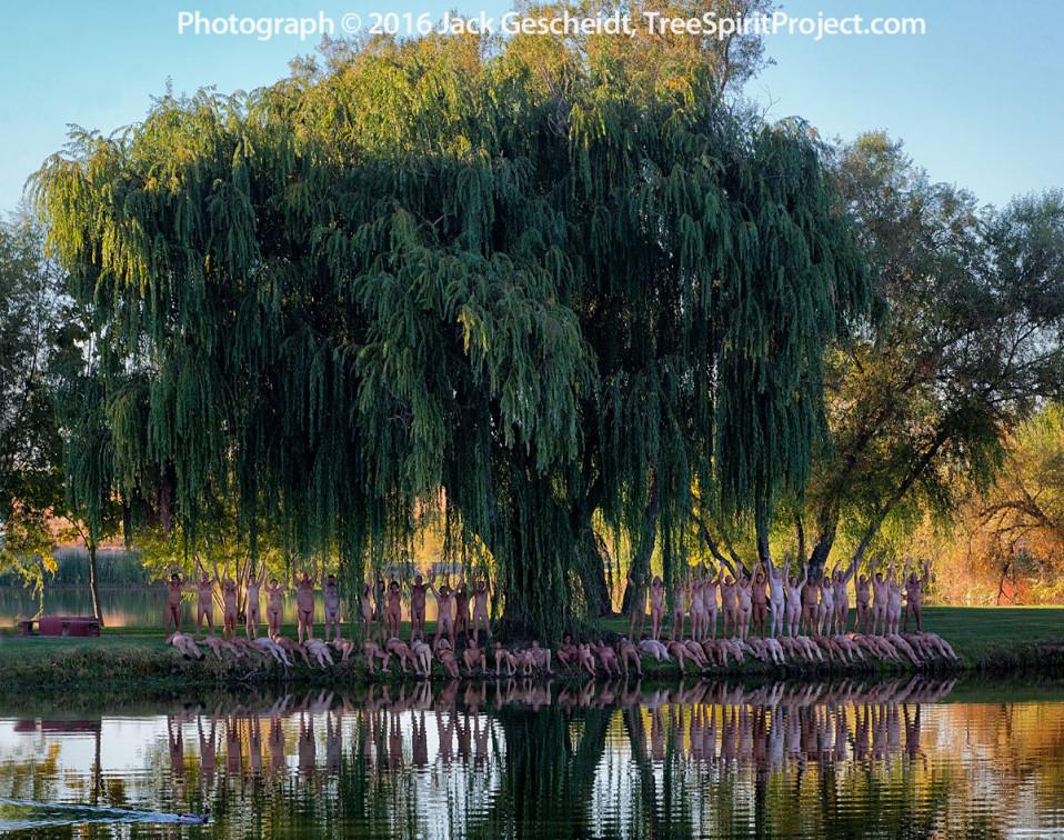 willow-del-sol-treespiritproject-5299-5300-1200p-web.jpg