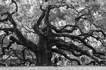 Join the next TreeSpirit photo event in May: save a forest and The Angel Oak Tree