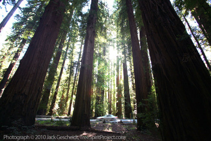 Adventure and wonder in The Richardson Grove