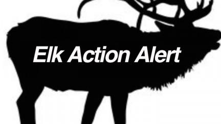 Point-Reyes-National-Seashore-Park-Tule-Elk-ACTION-ALERT-GRAPHIC-v2-WEB.jpg