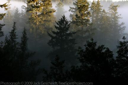 San Geron trees fog