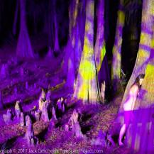 Cypress Trippy (magenta)