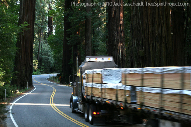 Reprieve, for now, for ancient Richardson Grove redwoods