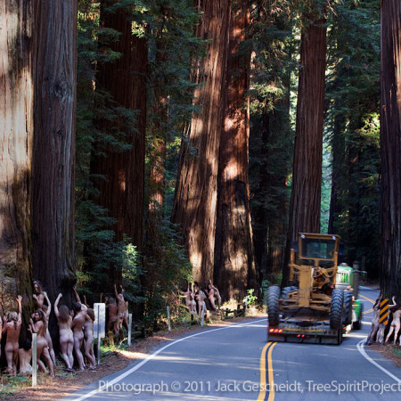 Here Before The Prophets – Richardson Grove State Park, CA