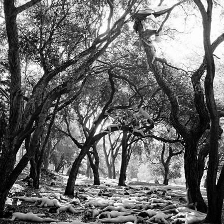 Last Stand – Memorial Oak Grove, Berkeley, CA