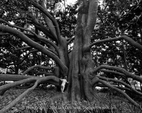 Magnolia Exploration