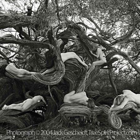 Tea Tree Tangle