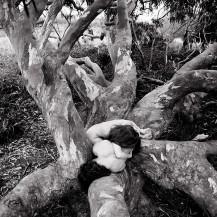 Eucalyptus Entwined