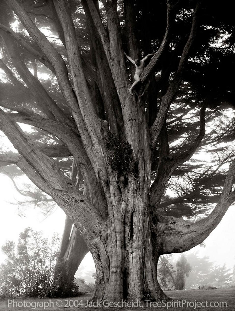 High On Cypress