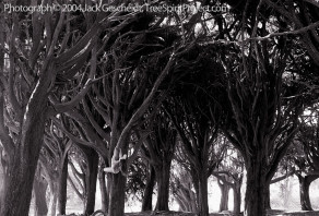 Cypress Grove Climb