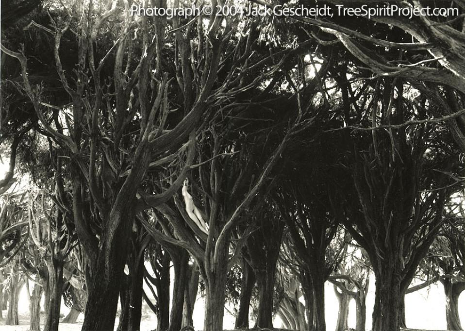 Cypress Grove Recline