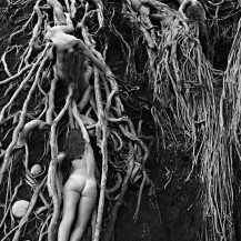 Fig Roots