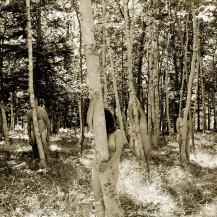 Birch Beings