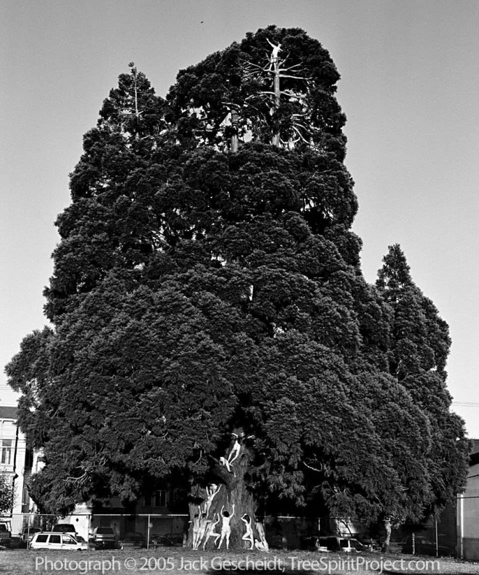 Mission Sequoia