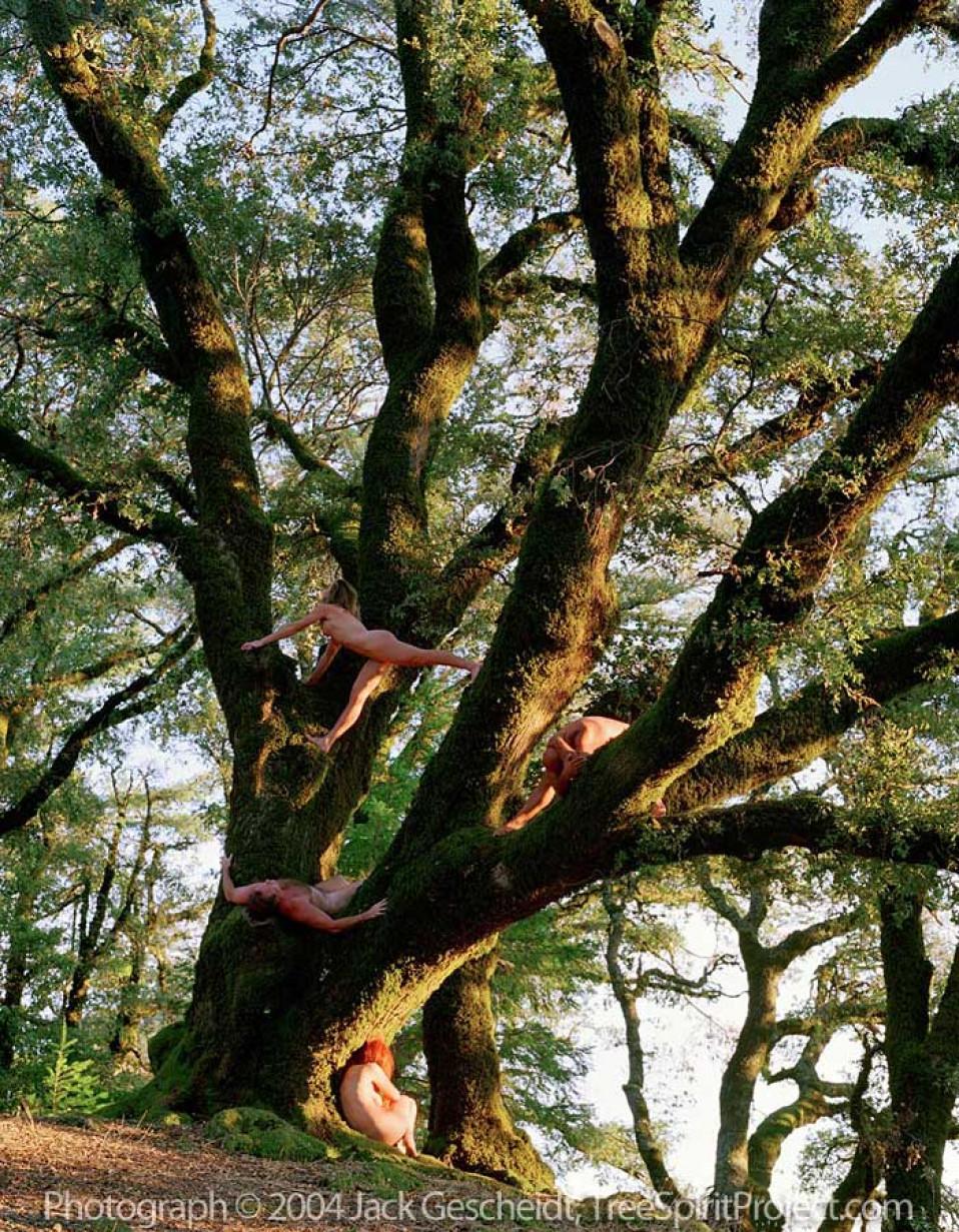 Rock Spring Oak