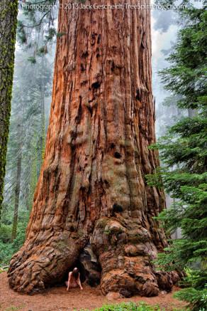 Sequoia-Adoration-TreeSpiritProject-©JackGescheidt-1000p-WEB